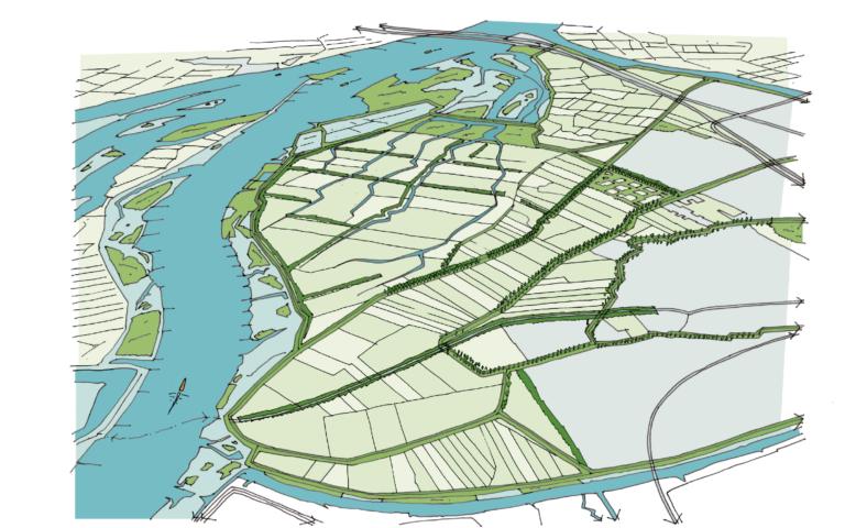 Hollandse Biesbosch